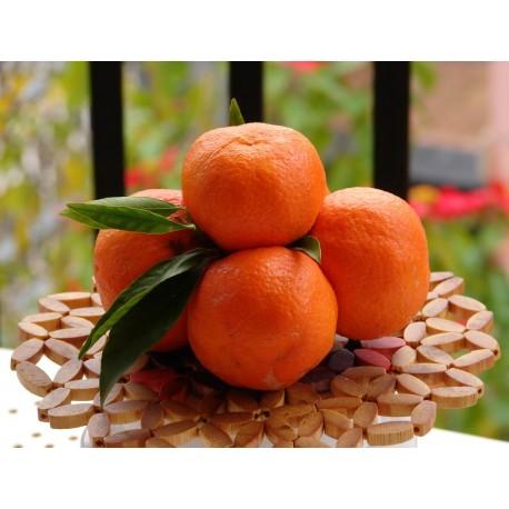 10 Kg di Mandarini Clementine