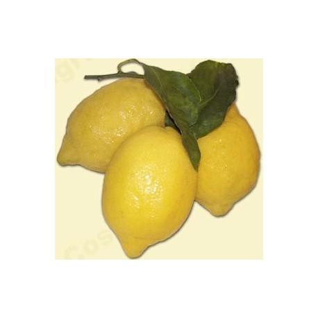 Limoni - Cassetta da 10 Kg
